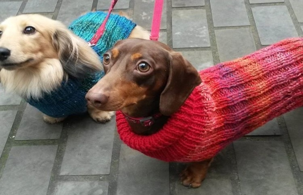 Betty Redbutton dogs, Pedddle