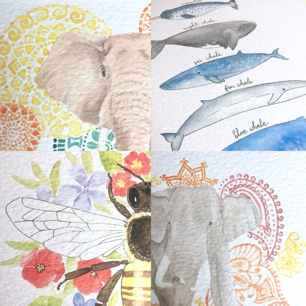 Watercolour animals, Giraffes & Unicorns, Pedddle
