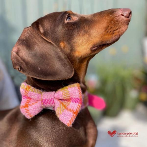 'Harris Tweed'Dog Collar