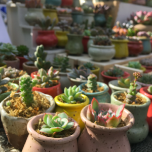 Green Rooms Market, Pedddle