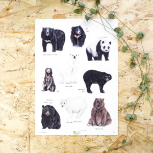 Bears of the World Print - This Thursday A4 or A3 Print featuring my illustrations of the world's bear species