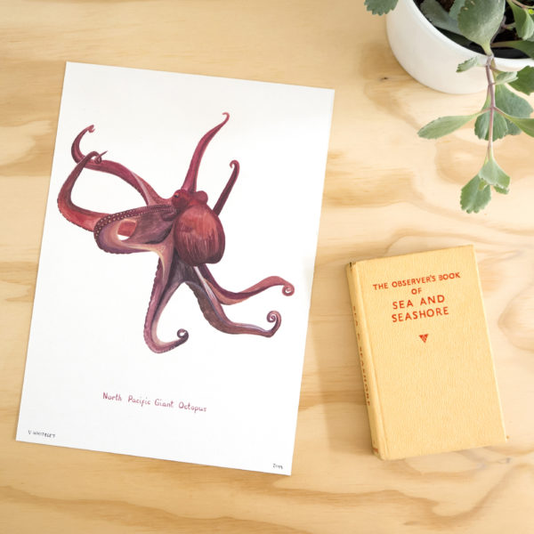 This Thursday, Pedddle. North Pacific Giant Octopus Print