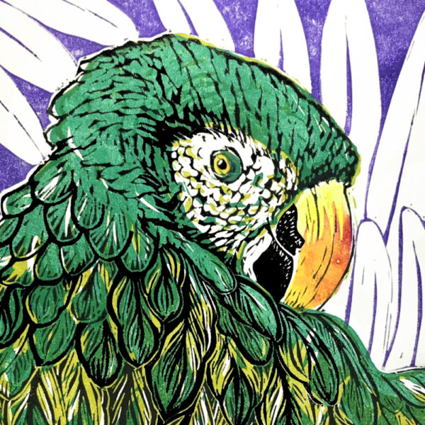 The Littlest Falcon - Macaw lino print. Detail of the face of a parrot, coloured green, purple and yellow with leaves behind.