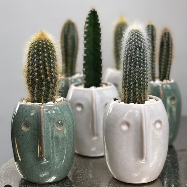 Cactus Parlour, Bob face planter and cactus