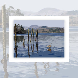Alison Butler Art, Lake Derwentwater Art Print, Digital Painting of Lake Derwentwater, Keswick with a duck in the water and Catbells in the Background