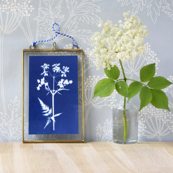 The Way to Blue Cow Parsley Cyanotype in gold edged glass hanging frame