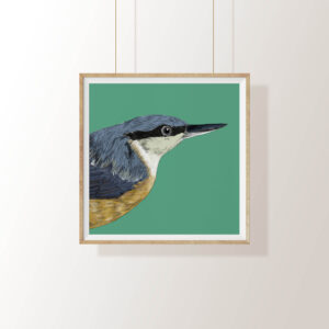 Fully Fledged Art Nuthatch Print , Print displayed in framePedddle