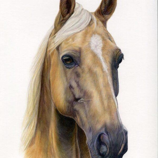 palomino, Laura Pennell Art