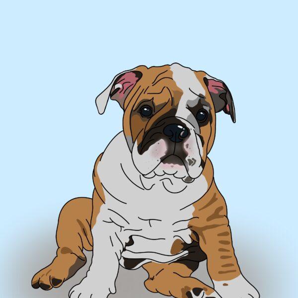 Bet Your Bottom Collar, Pet Portrait, Bull Dog, An English Bulldog puppy on a sky blue background