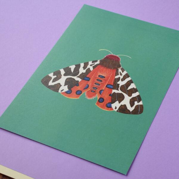 Conker Illustration, 1 Garden Tiger Moth Art Print on purple background