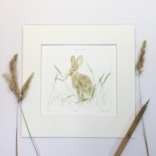 close up of Hare drypoint etching