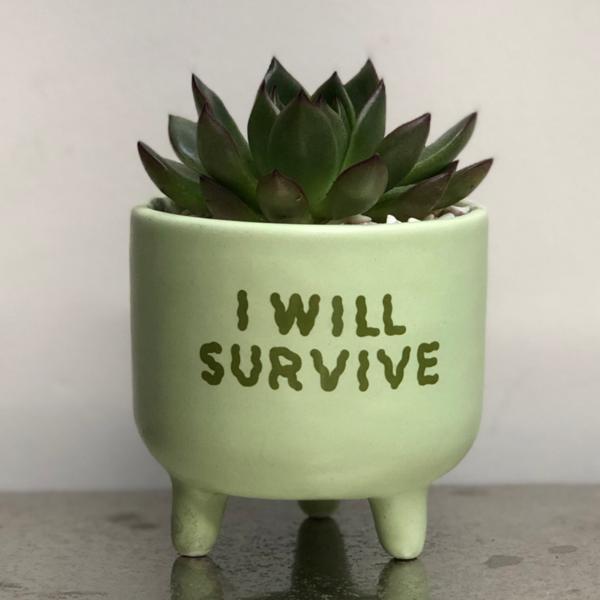 'I Will Survive' planting kit, Cactus Parlour