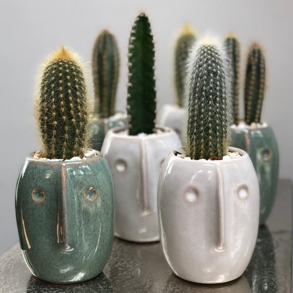 Bob planters with cacti, Cactus Parlour