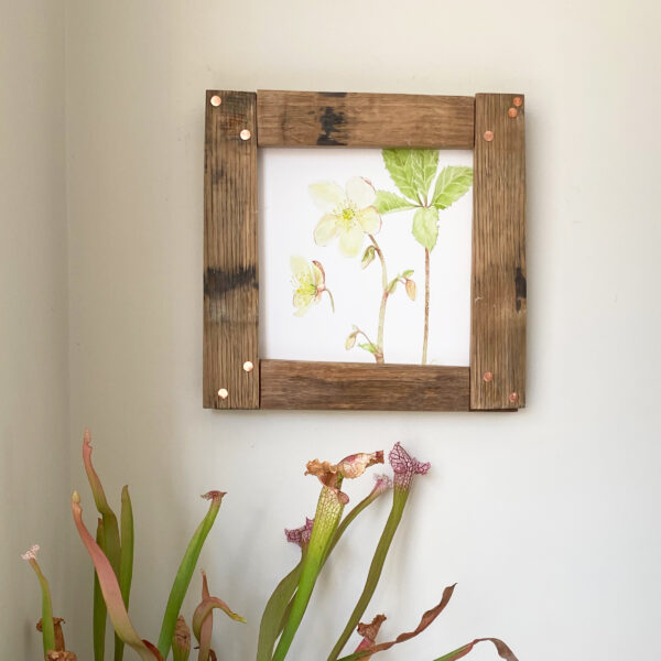 Jen and the beartree, Watercolour hellebore painting in handmade wooden frame