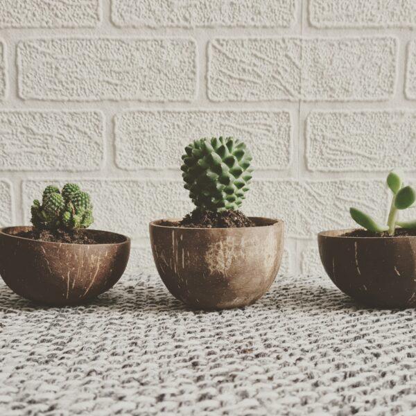 Coconut shell plant pots