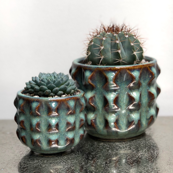 Teal pots with cactus and succulent, Cactus Parlour