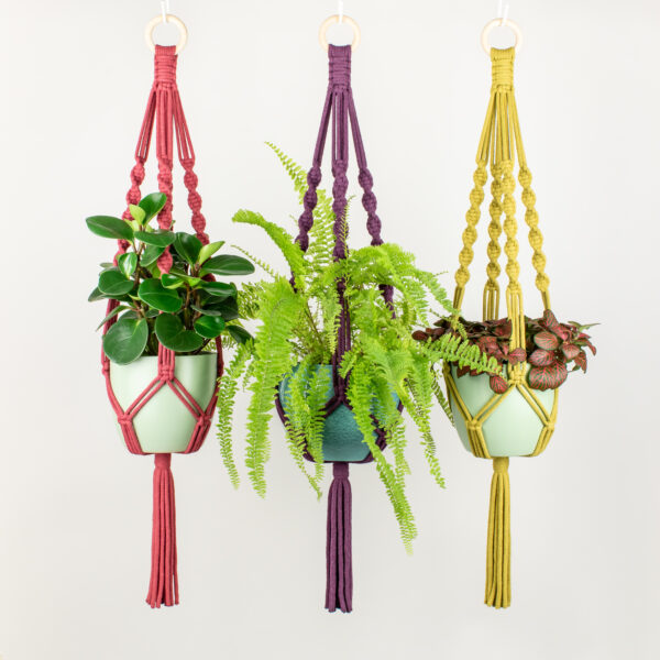 Rima Linden makes macrame plant hangers, recycled cotton colourful macrame plant hanger with wooden ring, sustainable hanging planter