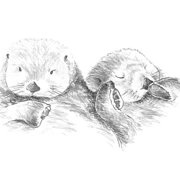 Art Hyde Out, two otters pencil scribble A3