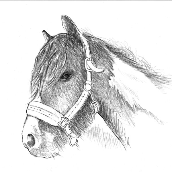 Art Hyde Out, pet portrait commission of Pony with halter