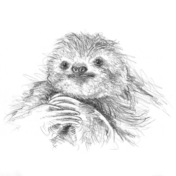 Art Hyde Out, sloth just sitting in pencil